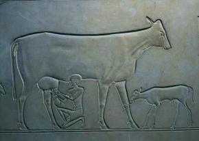 Egipcjanie-krowa