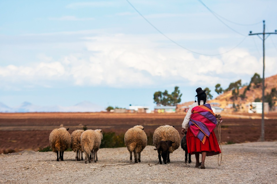 Aymara woman with sheep, Lake Titicaca, Puno area, Peru, South America